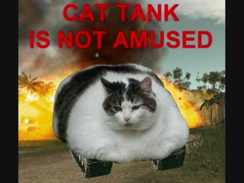 cat tank is not amused!!! - YouTube