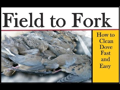 Dove Shoot Cleaning: Field to Fork