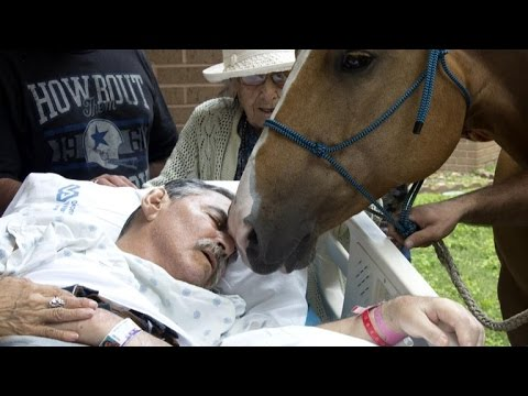 Horse Visits Dying Vietnam Veteran Owner For Heartfelt Goodbye