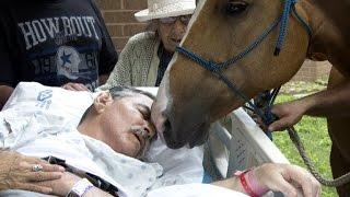 Horse Visits Dying Vietnam Veteran Owner For Heartfelt Goodbye
