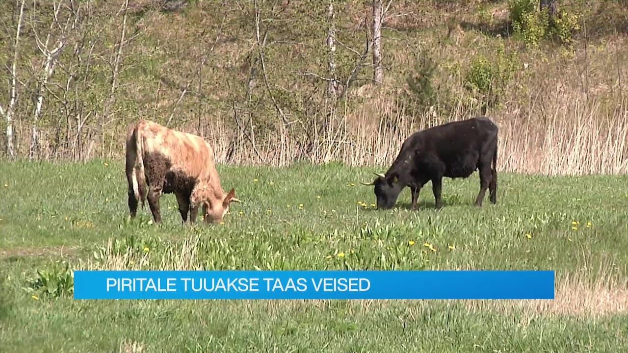 17.05.2021 - Tallinna uudised