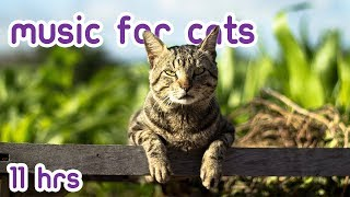 Relaxing Cat Sleep Music (Tried and Tested 2019!)