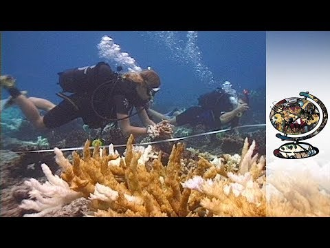 The Shocking Discovery of Coral Bleaching in the Seychelles (2001)