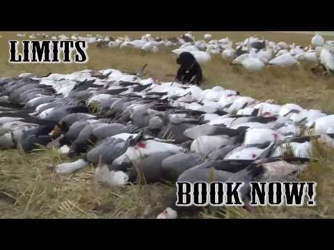 Pacific Wings Waterfowl Adventures Promotion