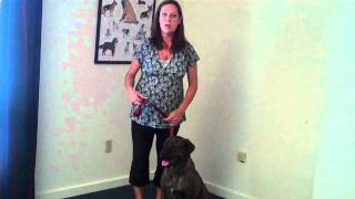 Learn What Your Body Posture is Saying to Your Dog