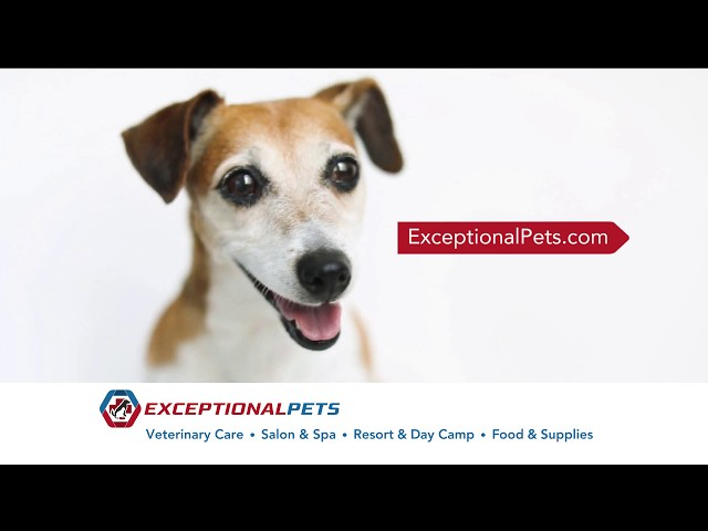 Exceptional Pets - Cave Creek Grand Opening!