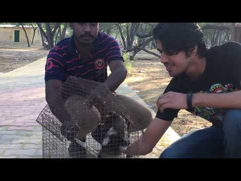 RESCUE RELEASE IN WILD   happiest moment   Wildly Indian