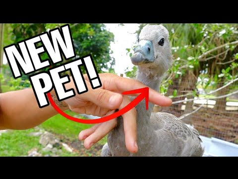 SURPRISE DINO BIRD ADDED TO THE RANCH!!!!