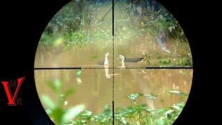 Berburu Ruak-Ruak di Rawa pinggiran Sawah | video lawas