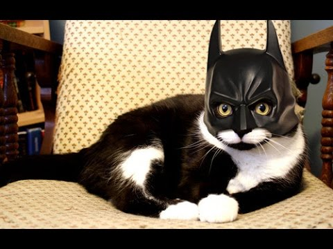 Badass cats – Funny cat Compilation 2017