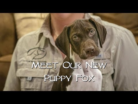Puppy Introduction - Bringing Home A New Puppy