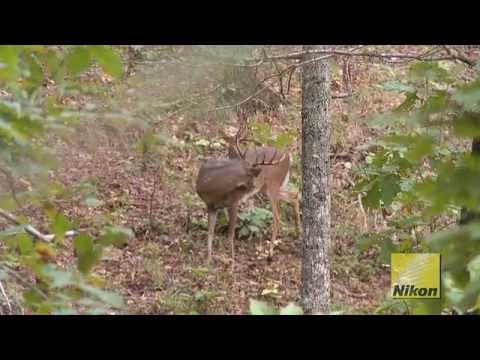 Hunting Georgia Whitetails With Foxworthy Outdoors (#152) @GrowingDeer.tv