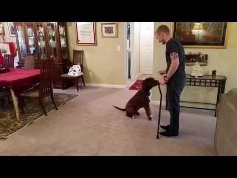 Freedom Service Dogs - Patrick & Ripple's Story