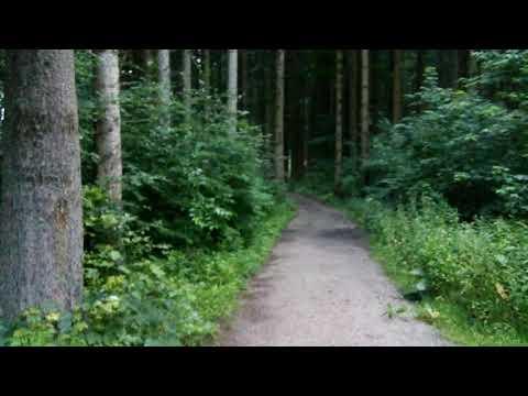 Граница Бельгии и Германии. Знаки в лесу.