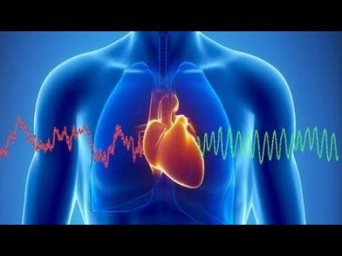 معلومات عن قلب الإنسان
