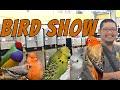 Bird Show 2020 Gratis(.mp3 .mp4) Mp3 - Mp4 Download