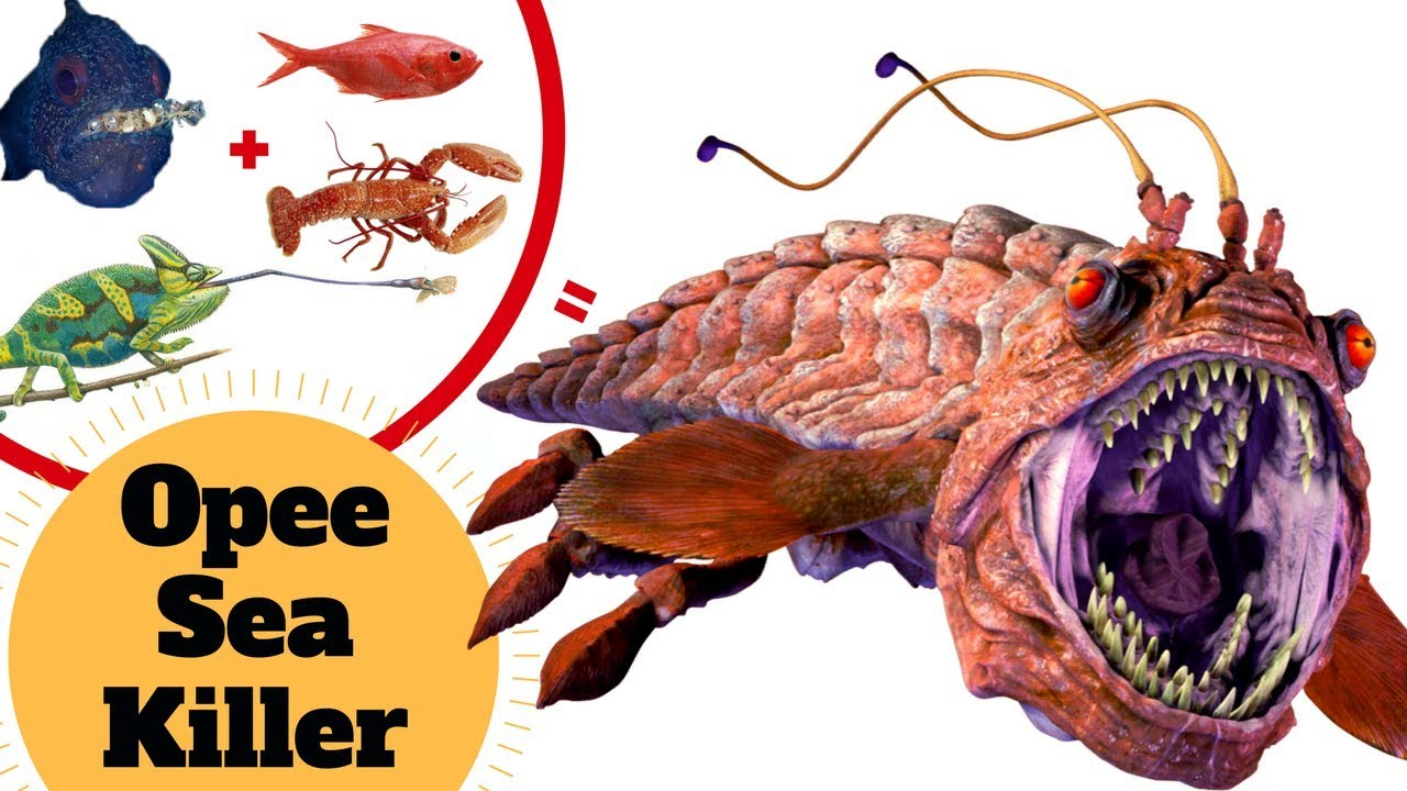 Anglerfish in the Naboo Abyss - O Sea Killer - Star Wars Naboo Creatures on star wars home planet, obi-wan kenobi home planet, anakin skywalker home planet, bothan home planet,