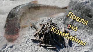 Ловля на комбайны Первая корюшка сезона на Поронае Сахалинская рыбалка Sakhalin fishing