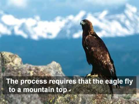 The Rebirth of an Eagl...