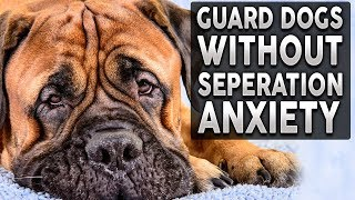Top 10 GUARD DOG BREEDS For FULL TIME Workers!