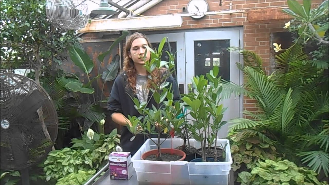How to Grow Mangroves - YouTube