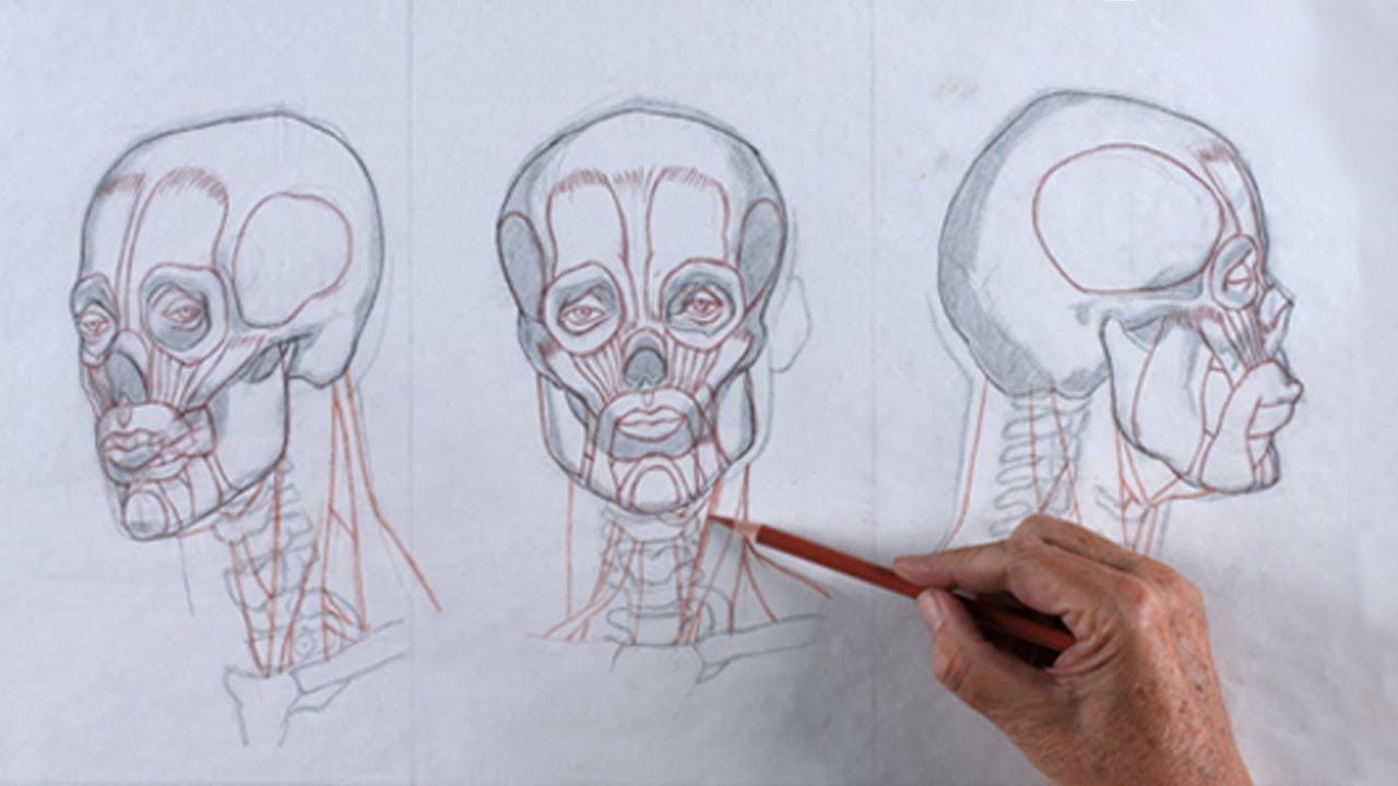 TRAILER | Reilly Method Head Drawing: Unit 1 – Anatomy with Mark ...