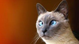 Озорные коты :3