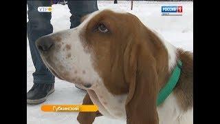 В Губкинском решили строже следить за хозяевами, выгуливающими собак без поводка и намордника