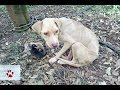 Rescue of a mother dog who gave birth chained in the middle of nowhere