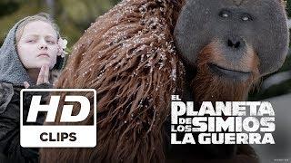 El Planeta de los Simios: La Guerra | Simio Malo y Maurice | Próximamente - Solo en cines