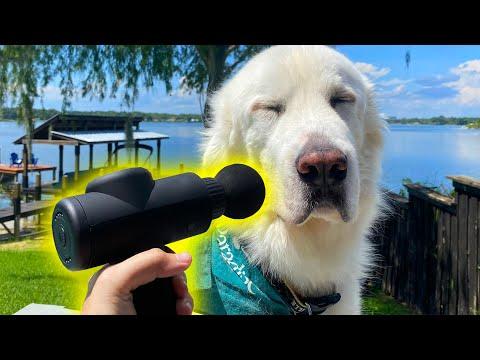 DOGS TRY MASSAGE GUN! (Super Cooper Sunday #250)
