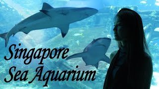 Singapore Sea Aquarium | S.E.A | Resort World Sentosa Island 2016