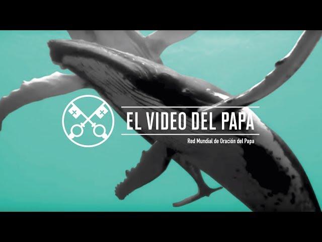 La protección de los océanos  – El Video del Papa 9 – Septiembre 2019