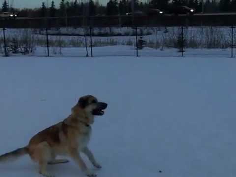 Rixton dog adoption video