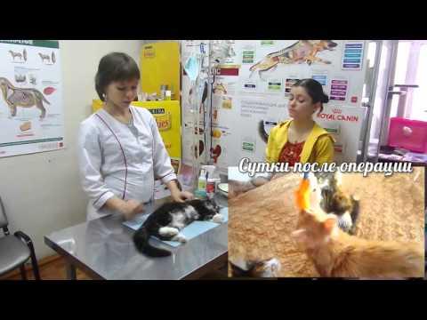 """О  процедуре стерилизации кошек  (салон """"четыре с хвостиком"""". г. Абакан)"""