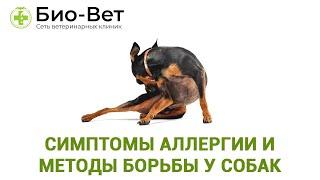 Симптомы аллергии и методы борьбы у собак. Ветеринарная клиника Био-Вет.