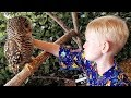 Owl Bites Child near Japanese Monkey Mountain (WT Part 5)