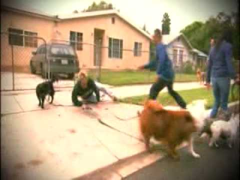 Cesar S Millan About Dog Houses