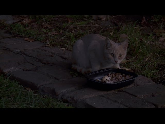 If You Feed Them, More Will Come | My Cat From Hell