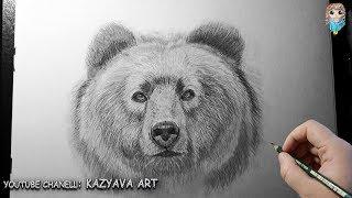 Как нарисовать морду медведя карандашом. Урок рисования
