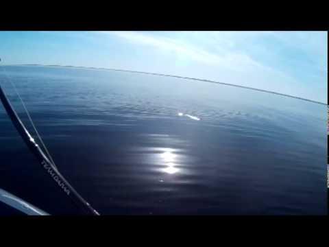 ловля судака на волгоградском водохранилище