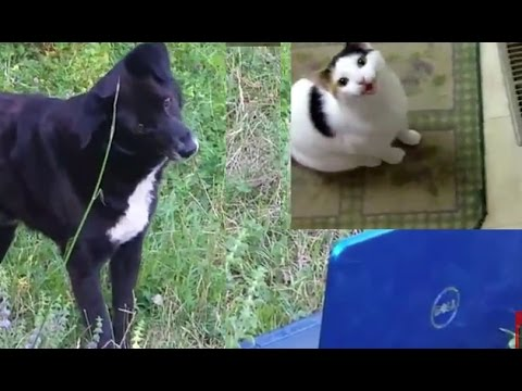 Cute Dogs Reacting to Cats Meowing Youtube Video [NEW HD 1080p]