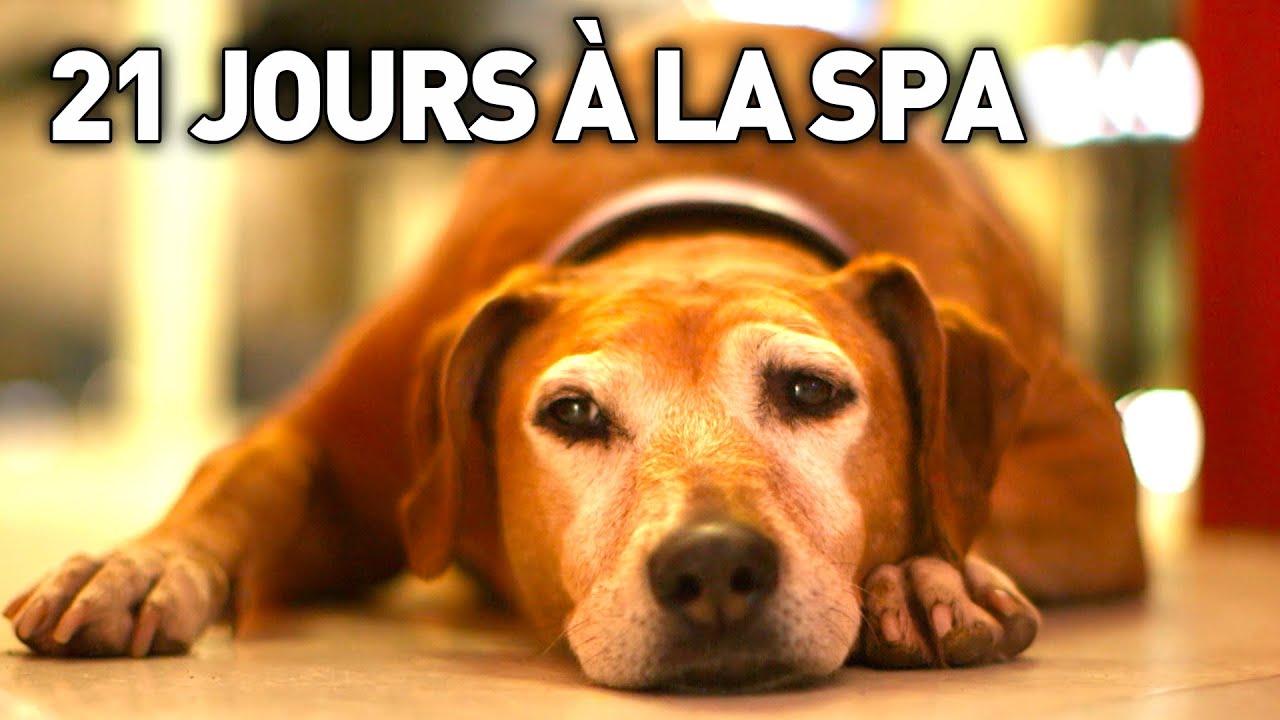 Download 21 JOURS A LA SPA - Documentaire Immersion