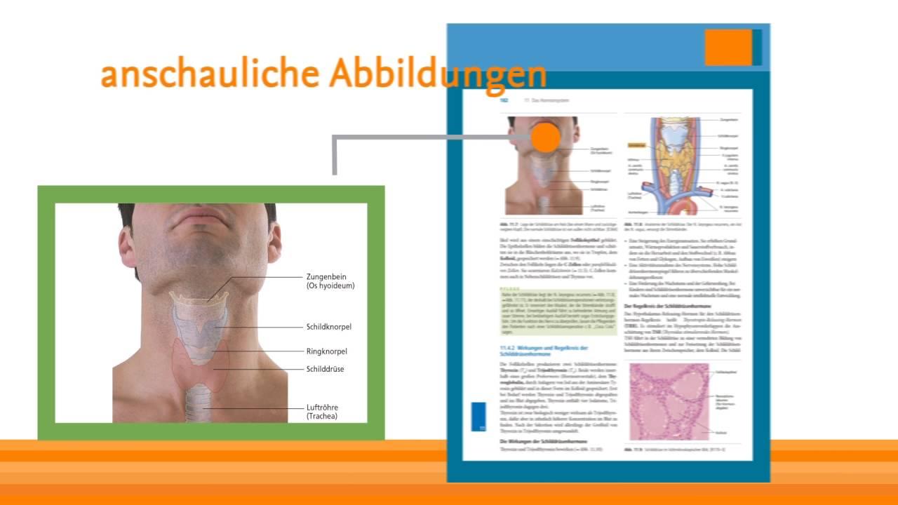Das Lehrbuch Biologie Anatomie Physiologie in der 8.Auflage - YouTube