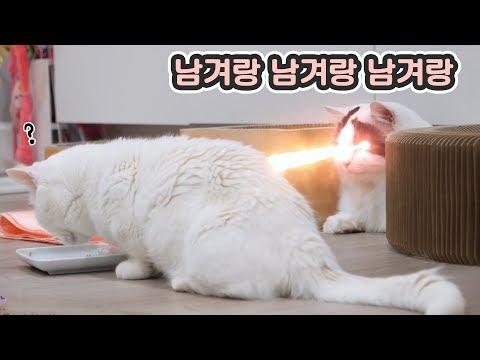 간식 남기라고 레이저 쏘는 고양이. 형아 남교랑  'ㅅ'