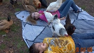 The Chicken & Duck PECK CHALLENGE - DONT MOVE! - CHICKENS EATING WORMS OFF KIDS!
