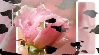 CHÚT HƯƠNG CHO ĐỜI - Nhạc Sĩ Diệu Hương - Trình Bày Quang Dũng