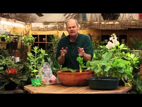 How to Grow Vegetables Indoors in a Pot