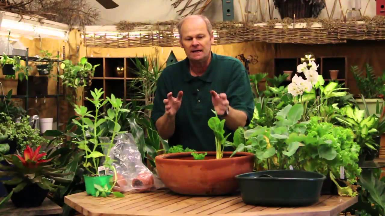 how to grow vegetables indoors in a pot - youtube