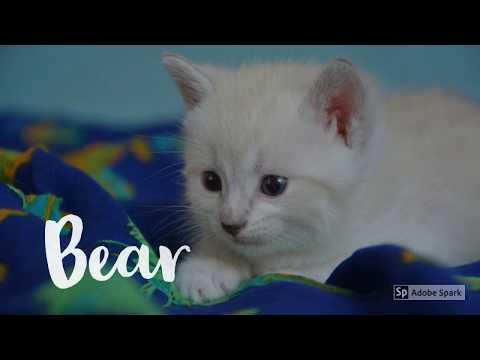 Male Kitten Names Inspiration 2017
